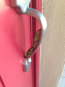 Frogs on the door