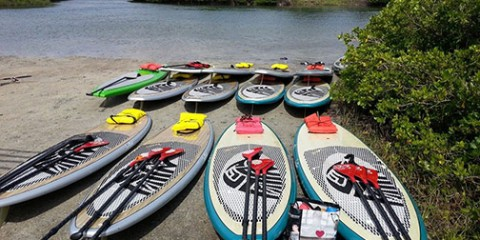 Paddleboards in New Smyrna